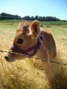 Rosie AKA Cowface